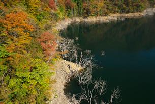 徳山湖の秋の写真素材 [FYI02557376]