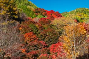もみじ湖の紅葉の写真素材 [FYI02557435]