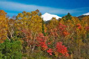 十勝岳連峰と紅葉の写真素材 [FYI02557664]