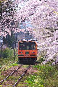 津軽鉄道と芦野公園の桜の写真素材 [FYI02557759]