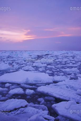野付半島の朝の流氷の写真素材 [FYI02557852]