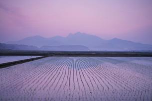 金峰山と水田の朝の写真素材 [FYI02557972]