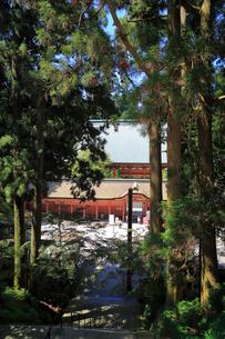 木々の間から見る根本中堂の写真素材 [FYI02559905]