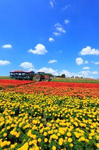 フラワーランドかみふらの トラクターバスと花畑の写真素材 [FYI02560044]