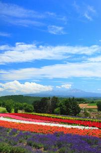 ぜるぶの丘と十勝岳連峰の写真素材 [FYI02560092]