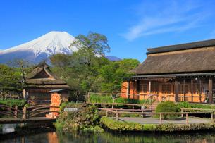 忍野八海と富士山の写真素材 [FYI02560574]