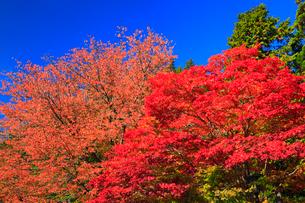 高野山の紅葉 の写真素材 [FYI02561295]