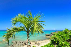 与論島 大金久海岸のシーマンズビーチの写真素材 [FYI02561630]