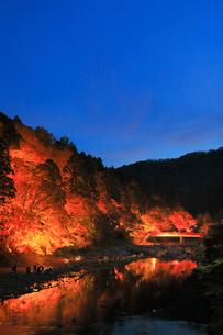 香嵐渓の紅葉 ライトアップ夜景の写真素材 [FYI02561825]