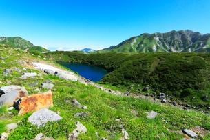 花咲く立山室堂平・ミクリガ池の写真素材 [FYI02563558]