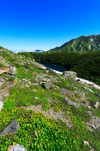 花咲く立山室堂平・ミクリガ池の写真素材 [FYI02563599]