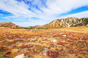 秋の室堂平より立山連峰の写真素材 [FYI02563669]