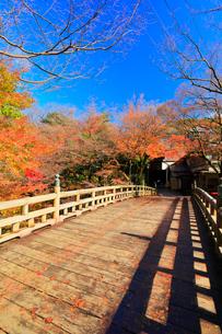 秋の山中温泉鶴仙渓・こおろぎ橋に紅葉の写真素材 [FYI02563824]