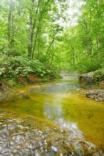 只見町恵みの森、新緑のブナと渓流の写真素材 [FYI02567312]