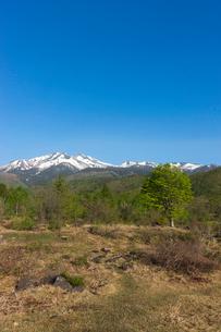 一ノ瀬園地の楓の大木と乗鞍岳の写真素材 [FYI02567634]