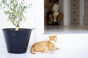ミコノスタウンのお店の前でくつろぐネコの写真素材 [FYI02567933]