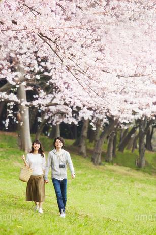 桜の木の下を歩くカップルの写真素材 [FYI02569057]