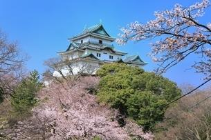 和歌山城天守閣とサクラの写真素材 [FYI02569987]