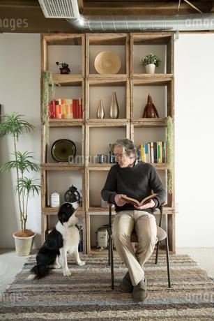 棚の前で愛犬と過ごすシニア男性の写真素材 [FYI02570784]