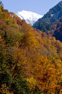 秋の黒部峡谷の写真素材 [FYI02571561]