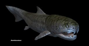 デボン紀の怪魚ダンクレオステウス2のイラスト素材 [FYI02575984]