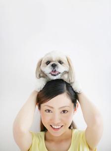 犬(シーズ)と女性の写真素材 [FYI02581368]