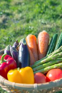 ざるに盛られた野菜の写真素材 [FYI02597373]