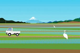 田んぼと富士山 イラストのイラスト素材 [FYI02597584]