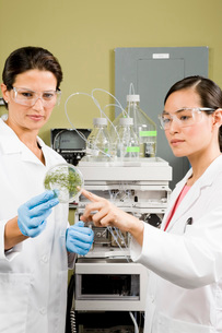 ethnic scientists examining petri dishの写真素材 [FYI02599990]