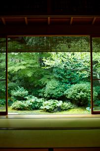 和室から見た庭の写真素材 [FYI02613828]