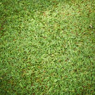 芝生の写真素材 [FYI02614825]