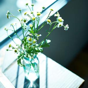 活けた花の写真素材 [FYI02615499]