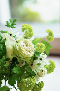 窓辺のグリーンの花の写真素材 [FYI02615990]