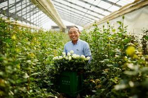 温室でバラの花を持つ笑顔の農夫の写真素材 [FYI02616056]