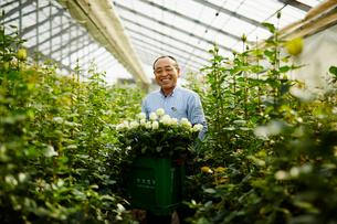 温室でバラの花を持つ笑顔の農夫の写真素材 [FYI02616060]