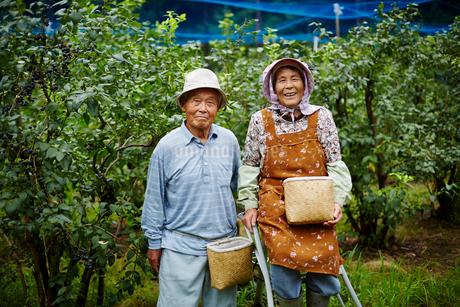 ブルーベリー畑に立つ農家夫婦の写真素材 [FYI02616069]