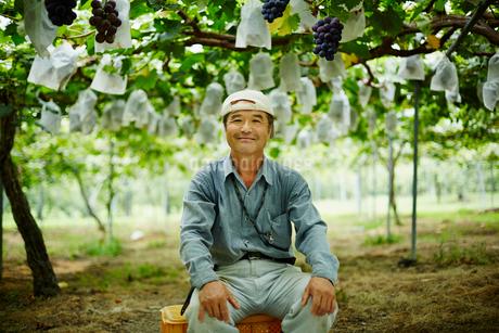 ブドウ畑の農夫の写真素材 [FYI02616101]