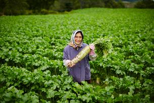 ダイコンを持つ笑顔の農婦の写真素材 [FYI02616102]