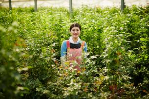 温室のバラの中に立つ笑顔の農婦の写真素材 [FYI02616111]