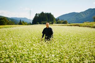 花咲くソバ畑に立つ農夫の写真素材 [FYI02616146]