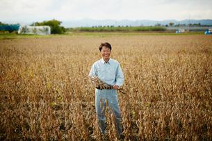 大豆畑の笑顔の農夫の写真素材 [FYI02616152]
