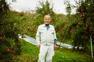 リンゴ畑の笑顔の農夫の写真素材 [FYI02616176]