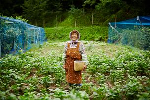 畑に立つ笑顔の農婦の写真素材 [FYI02616184]