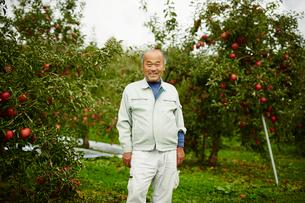 リンゴ畑の笑顔の農夫の写真素材 [FYI02616190]