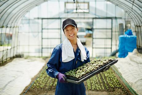 苗を持つ笑顔の農婦の写真素材 [FYI02616251]