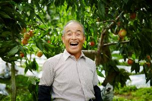 モモ畑の笑顔の農夫の写真素材 [FYI02616307]