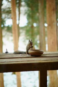 エサを食べるリスの写真素材 [FYI02616326]