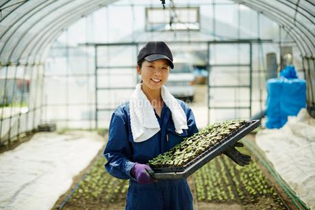 苗を持つ笑顔の農婦の写真素材 [FYI02616492]