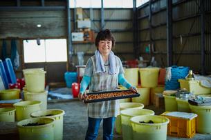 梅干しを持つ笑顔の女性の写真素材 [FYI02616601]