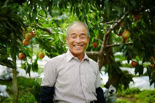 モモ畑の笑顔の農夫の写真素材 [FYI02616824]